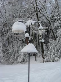 Bird feeder snow