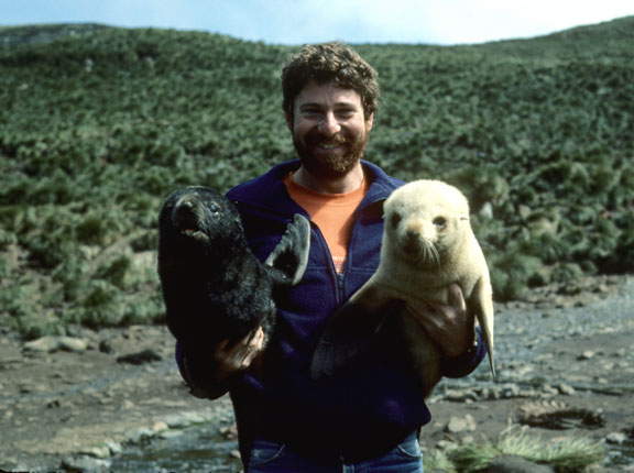 Antarctic Fur Seal Pups. I didn't know it at the time, but as this photo was taken, the blonde fur seal was peeing on my leg.